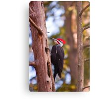 Pileated Woodpecker - Ottawa, Ontario Metal Print