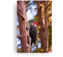 Pileated Woodpecker - Ottawa, Ontario Canvas Print