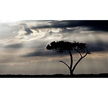 One Tree Hill - Northland, NZ Photographic Print