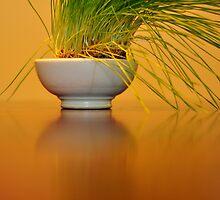 Tropical Wheat Grass by Michele Jensen