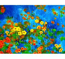 Flowering glade Photographic Print