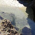 Sea Grass in Tide-Pool by Sandra Gray