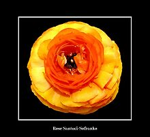 Beautiful Orange Flower by Rose Santuci-Sofranko