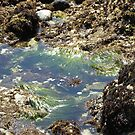Beach Grasses Wave in the Tide Pool by Sandra Gray