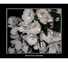 Blossoms in the rain Photographic Print