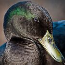 Coquettish Duck by Briar Richard