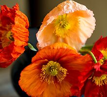 Multi coloured poppies by Flarli