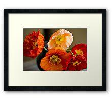 Multi coloured poppies Framed Print