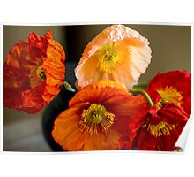 Multi coloured poppies Poster
