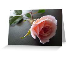 Petit Cecile Brunner Greeting Card