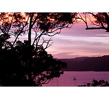 Pittwater Musk Photographic Print