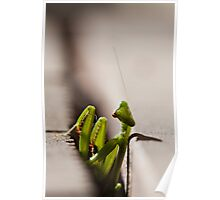 Lurking Praying Mantis Poster