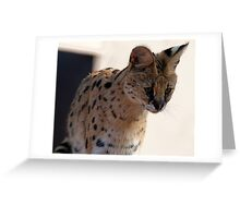 Nanki the African Serval Greeting Card