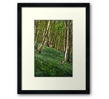 Bluebells in Timbercombe Wood, The Cotswolds, England Framed Print