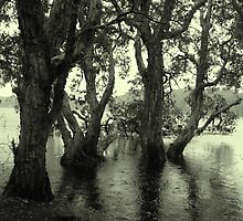 Lake Ainswoth - Lennox Head  by Louise Linossi Telfer
