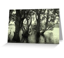 Lake Ainswoth - Lennox Head  Greeting Card
