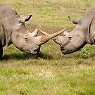 White Rhino's Cross Horns by Cecily McCarthy