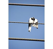 Peewee on a wire Photographic Print