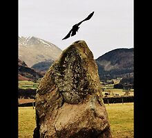 Castlerigg Stone Circle Crow by Fiona Exon