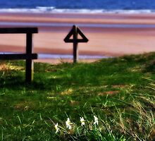 Daffodils at Alnmouth by Fiona Exon