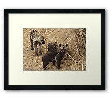 Family of future predators Framed Print