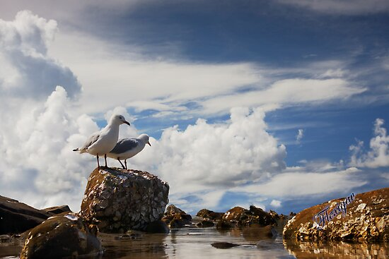 Gulls on the coast by flexigav