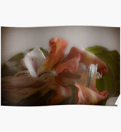 Dried Tulip Flower Petals Poster