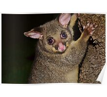 Stunned possum Poster
