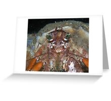 Hairy Red Hermit Crab Greeting Card