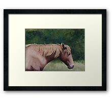 Assateague Island Wild Pony Framed Print
