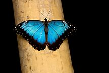 Black'n Blue by Luca Renoldi