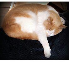 Sleeping Cat Photographic Print