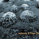 océanne by NordicBlackbird