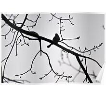 Spring Robin Poster