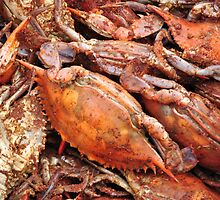 Crabs by Robin Lee