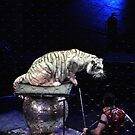 White Tiger by Robin Lee