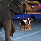 Dog in an Elephant's Basket by Robin Lee