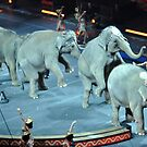 Circus Elephants by Robin Lee