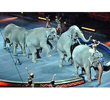 Circus Elephants Photographic Print