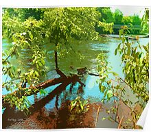 Branching the Banks of the Grass River Poster