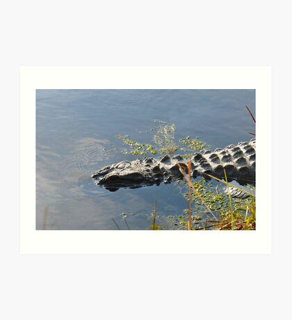 Gator Country Art Print