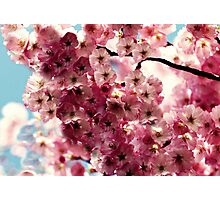cherry Photographic Print