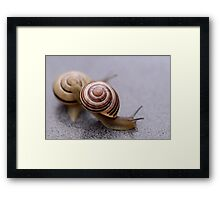 Who Says Snails Are Not Sporty? Framed Print