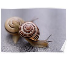 Who Says Snails Are Not Sporty? Poster