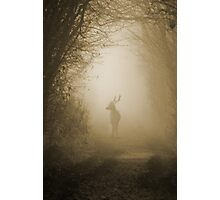 Stag in the Mist  Photographic Print