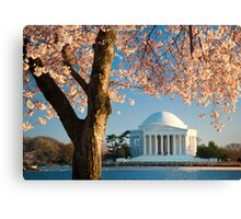 Jefferson and Cherry Blossoms Canvas Print