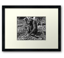 A Moment To Reflect Framed Print