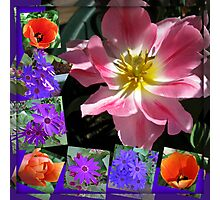 Spring Sunshine Tulips Collage Photographic Print