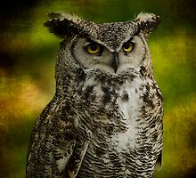 Great Horned Owl by hampshirelady