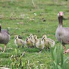 Greylag Goose family by DutchLumix